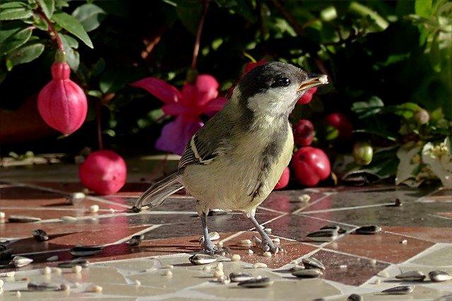 ptáček u zrní
