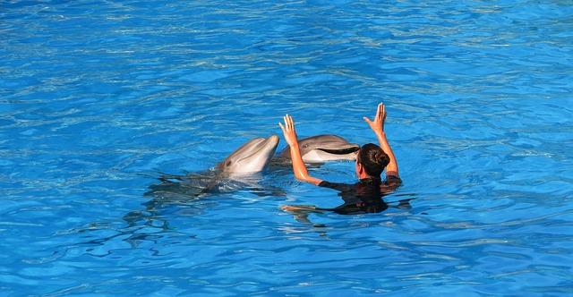 cvičení delfínů