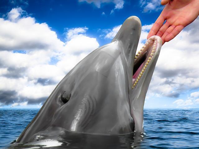 kontakt s delfínem