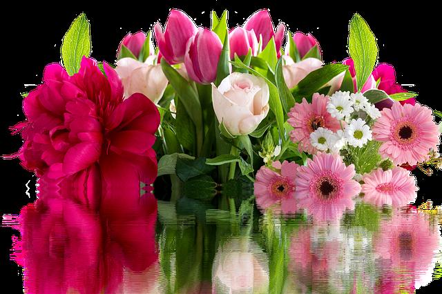 růžové rostlinky